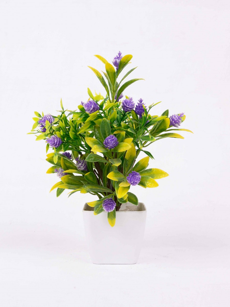 Green and Yellow Star Orchid Plant